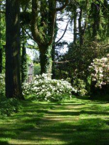 Cool, green shade at Galloway House Gardens, Garlieston